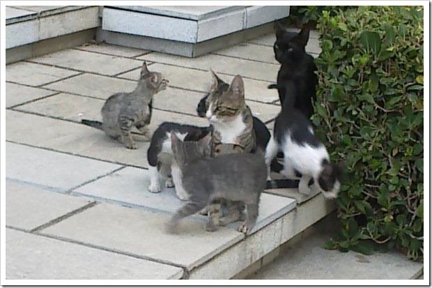 Gatos en la entrada de la oficina